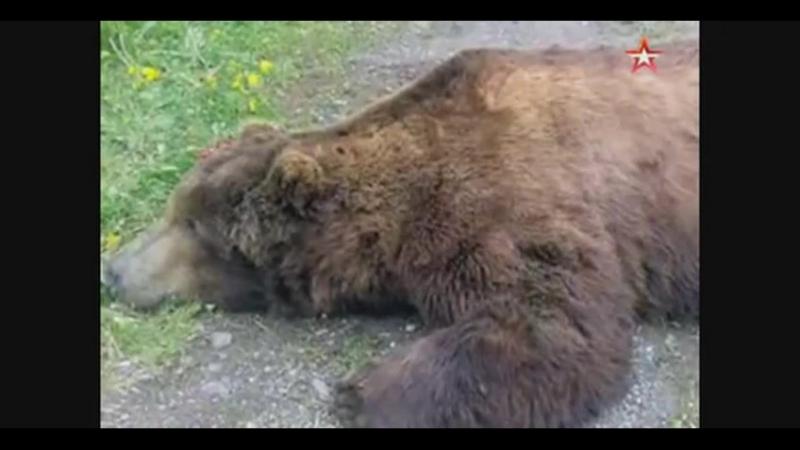 вот это медвежонок