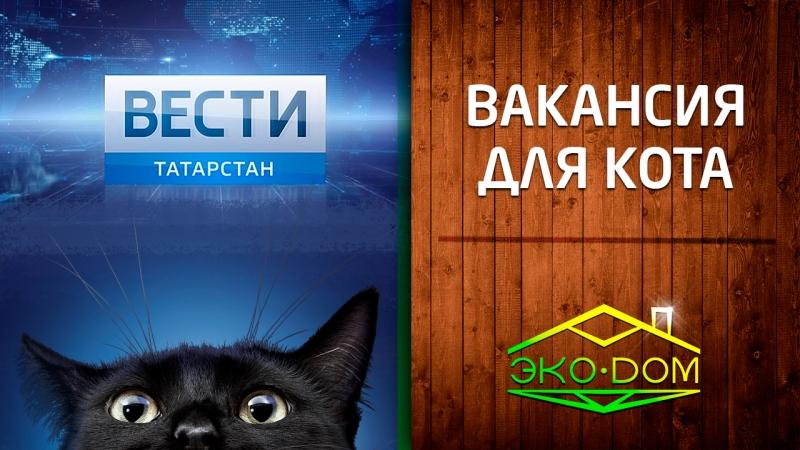 ЭкоДом примет кота на работу Репортаж Вести Татарстан