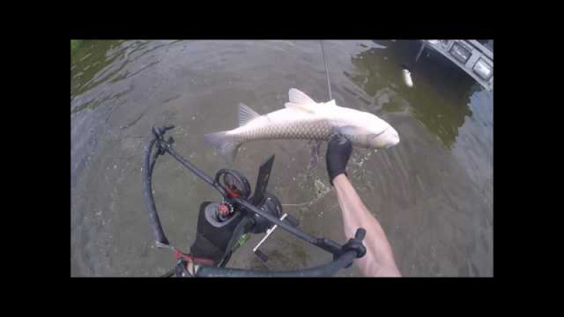 Bowfishing Grass Carp with the Bad Ass Slingshot