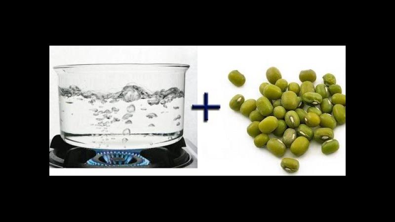 Проростки после кипятка. Разрыв шаблона сыроеда / The sprouts after boiling water.