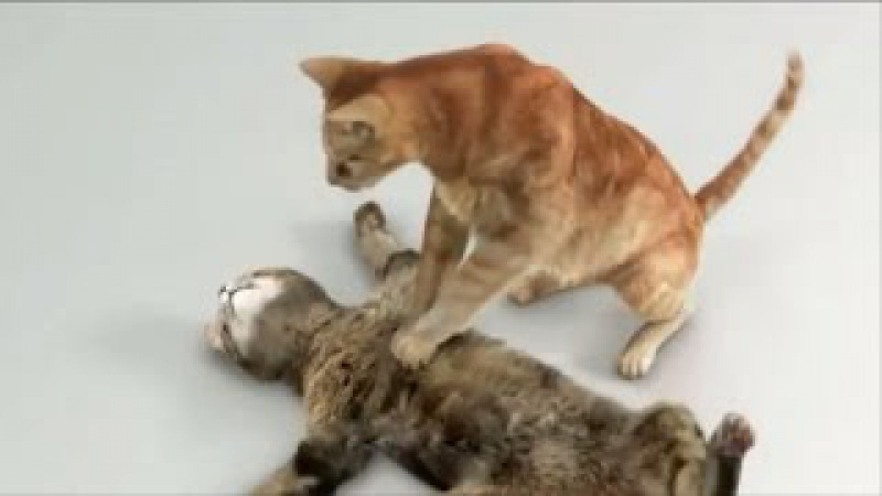 Top 10 Funny Cat Acting Like Human Funny Commercials