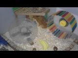 DIY Flying saucer wheel for hamsters