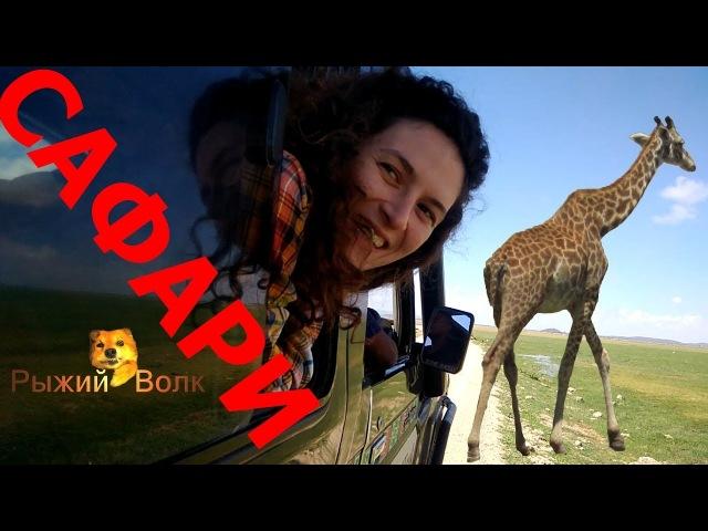 Жирафы и смешные макаки - Сафари! Каникулы в Африке. Кения. День 5, часть 3 - Сафари!