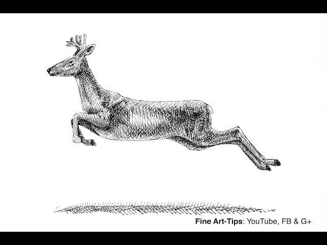 How to Draw a Deer Elk Reindeer Moose