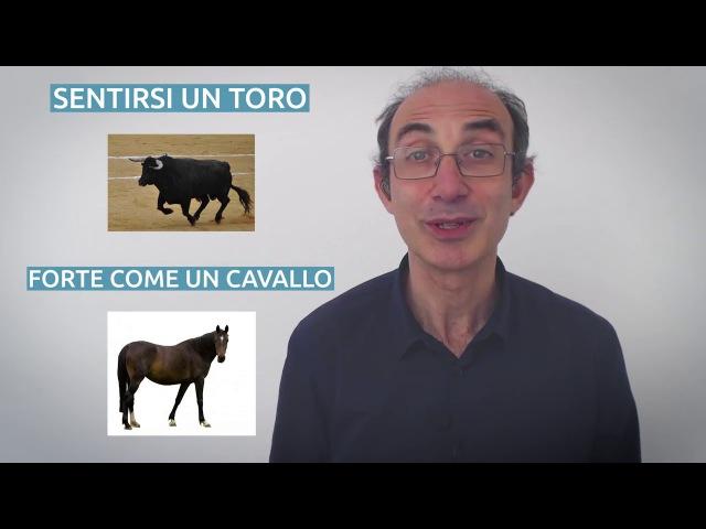 Uomini e animali | Italiano in pratica
