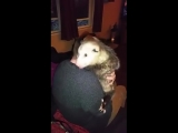 The Story of LJ the orphaned opossum has 18234 members My four brothers