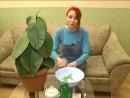 Растут как на дрожжах Как спасти домашнее растение