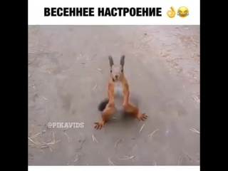 [v-s.mobi]Белка танцует под песню ну погоди.mp4