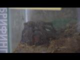 Скорпион в подарок