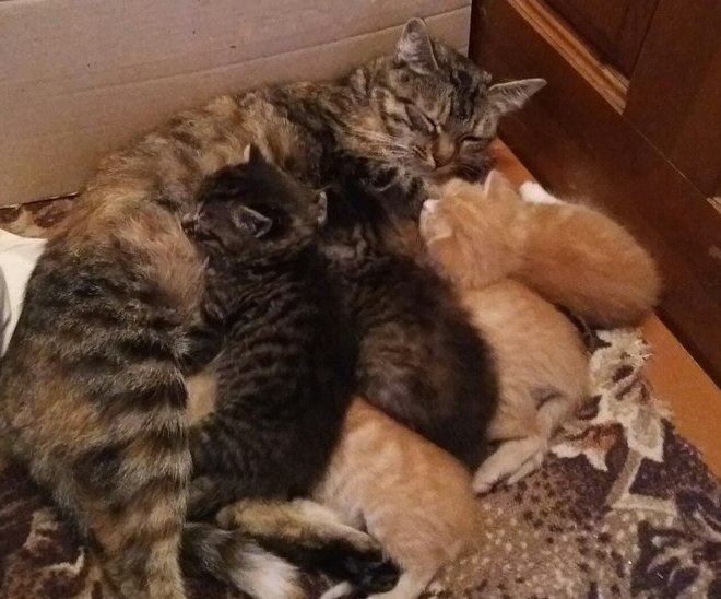 Отдам трех рыженьких и одного полосатого котенка в добрые руки (все мальчики)