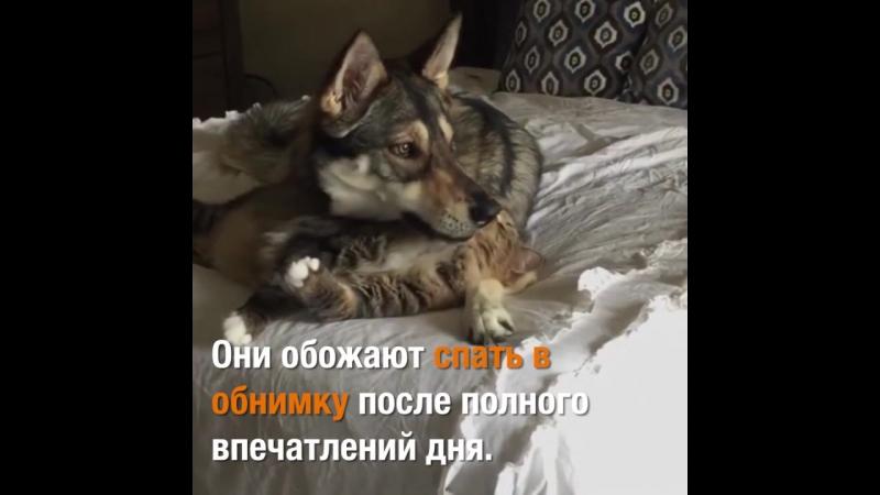 Хозяева взяли собаку в приют и разрешили самой выбрать себе братика. Это была любовь с первого взгляда!