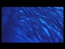 Красное море, Шарм-Эль_Шейх. Заповедник Рас- Мохаммед) 1 часть)Август 2014)