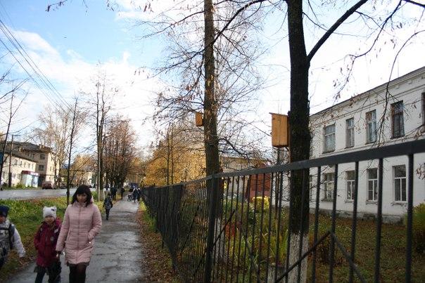 Папа Карло (корпоративная кличка учителя технологии и бывшего директора школы) строит жилые кварталы на полную катушку.  14 ноября 2017