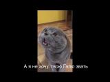 Кот говорит - Голова моя болит-87Za-ACzK-M