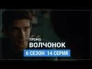 Волчонок 6 сезон 14 серия Русское промо