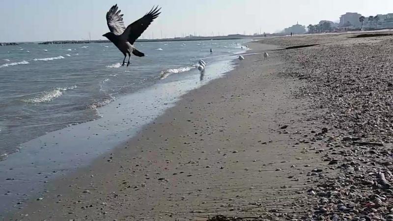 Ворона на море
