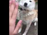 Если бы у меня был пес