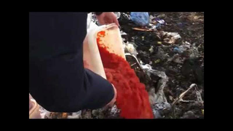 В ЛНР смешали с грязью и раздавили центнер красной икры