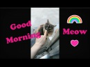 Cat Therapy I Good morning I Kitten I 고양이 I Animal Therapy