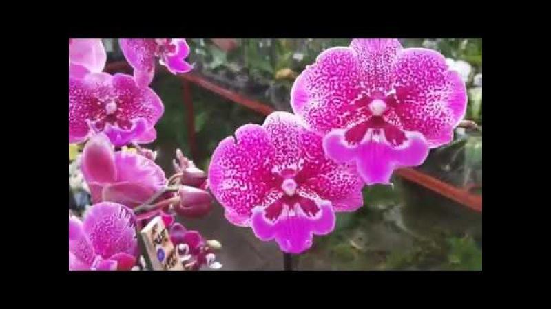 Обзор орхидей и других растений в теплицах ( г. Долгопрудный)