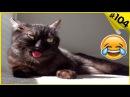 Смешные кошки приколы про кошек и котов 2017 Приколы с котами 104