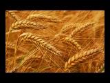 Крымское зерно. Результаты при Украине и России