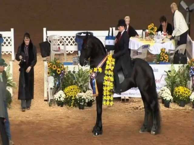 Onne Ster 2011 Friesian World Champion