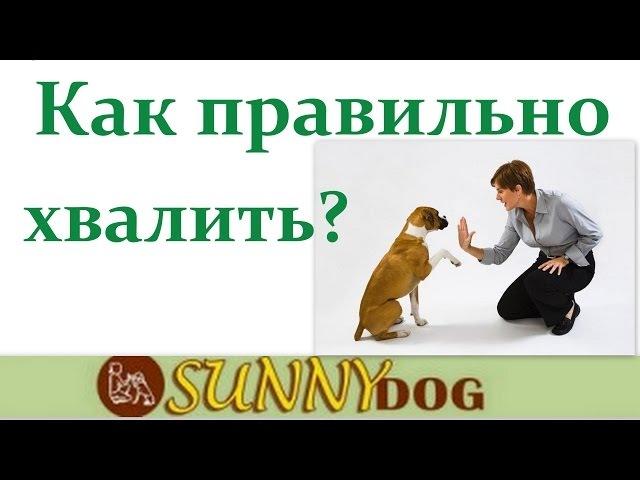 Как правильно хвалить собаку во время дрессировки