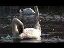 Видеофильм «Аҧсны. Абхазия - Страна Души»