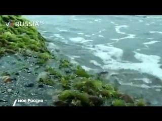 Девушки нудистки Сочинский пляж