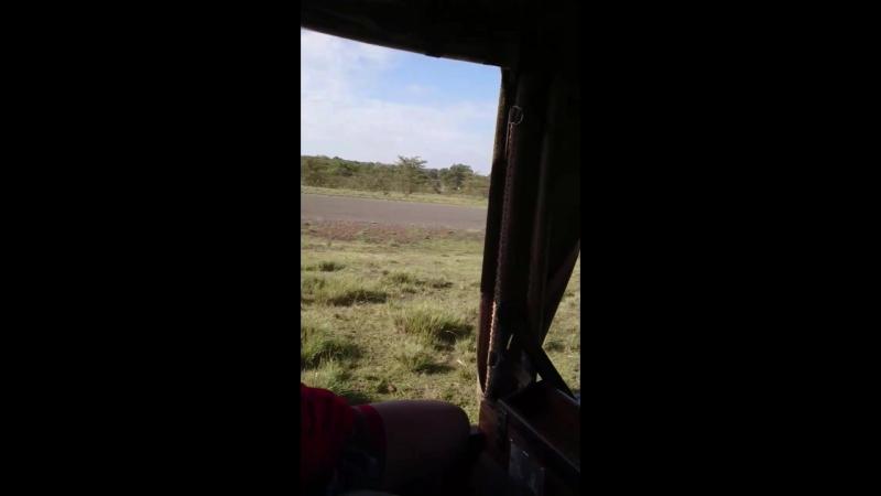 Зачистка взлетной полосы от бабуинов и зёбр