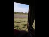 Зачистка взлетной полосы))) от бабуинов и зёбр