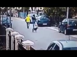Собака спасла девушку от грабителя