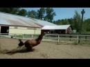Horse dab re coub/view/108fzd