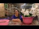 Орхидеи Групповая посадка в 19 литровые колбы Кора цеофлора