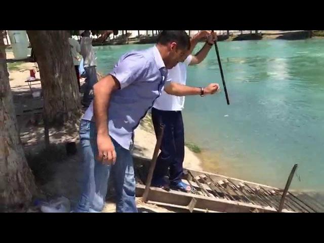 Mingecevir kanali, baliq-ovu (lew)
