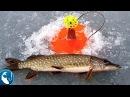 🐟 Нарушаем правила. Ловля щуки на жерлицы в карьере на карася Рыбалка с Родионом