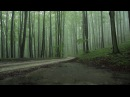 Rain Sounds 8 Hours The Sound of Rain Falling in a Foggy Forest Relaxing
