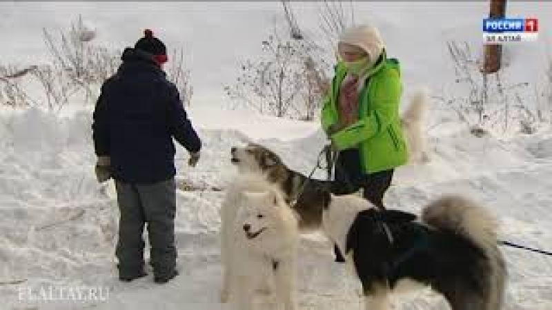 Соревнования «Кадын суу — 2018» вновь собрали самых сильных собак РА и нескольких городов Сибири