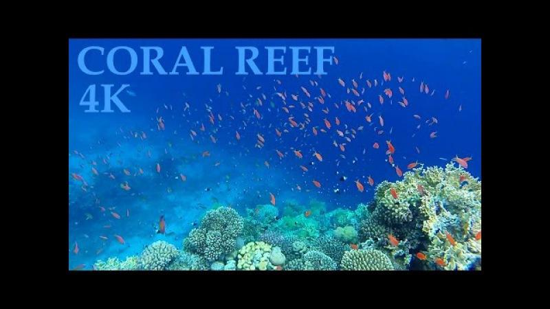Коралловый риф отеля Sharm Plaza / Far Garden Reef 4K 2016