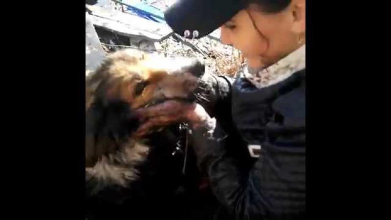 МЧС - совцы отказались, другого выхода не было! . Две девушки, рискуя жизнью, бросились на помощь собаке, которая тонула в болоте. / О собаке, человеке, и не только...