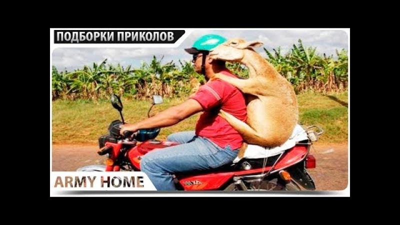 ПРИКОЛЫ 2018 Февраль 372 ржака до слез угар прикол - ПРИКОЛЮХА