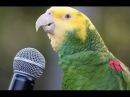 Funny Parrot - A Cute Funny Parrots Talking Videos Compilation NEW HD