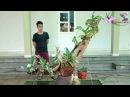 Cuộc sống người Ninh Bình- vườn phong lan Đai châu đẹp của A35 yên khánh