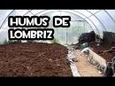 Como hacer Humus de Lombriz | Huerto Organico