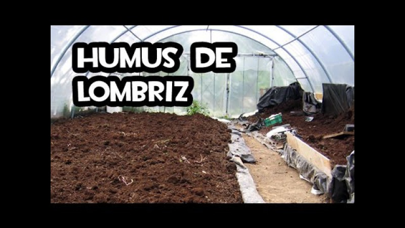 Como hacer Humus de Lombriz Huerto Organico