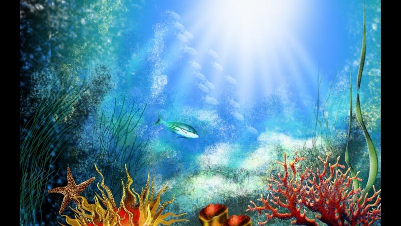 Красоты Красного моря подводная жизнь, морская прогулка