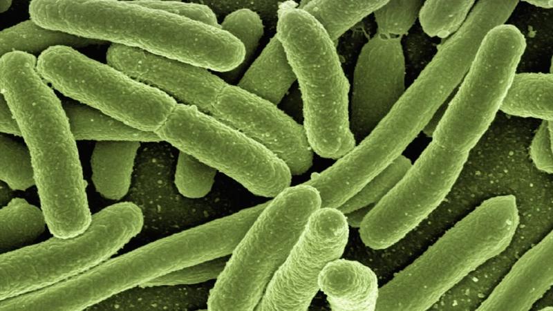 Gift im Darm - 100 Krankheiten, eine Lösung