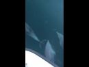 Дельфины плывут. Потрясающее видео! Очень красиво! Черное море. Сочи.