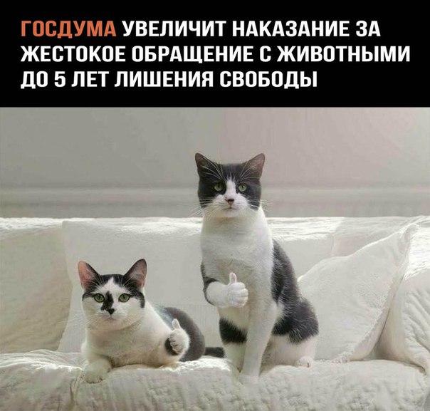 https://pp.userapi.com/c841329/v841329327/4bf12/HfEUvotQaHc.jpg